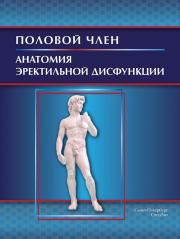 Половой член. Анатомия эректильной дисфункции